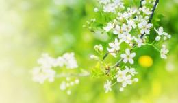 Blüten mit grün