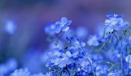 Blumen blau Ausschnitt 900x180